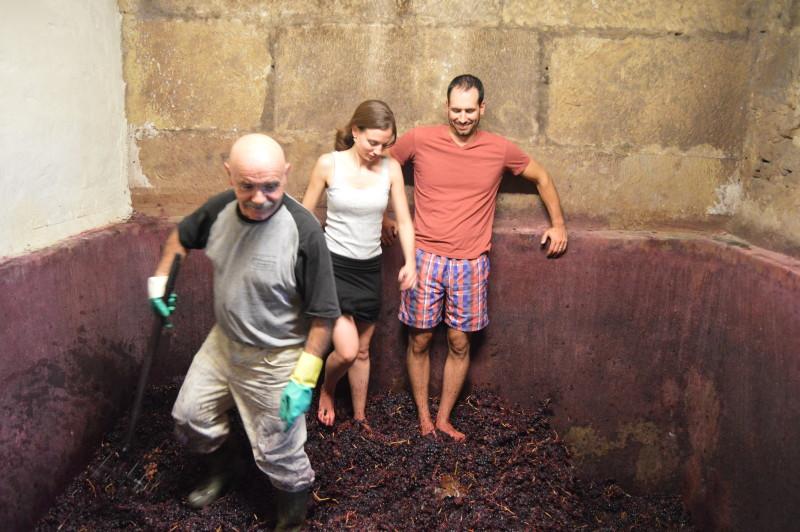 Harvest Rioja