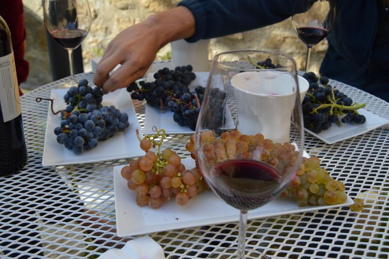 Grape tasting followed by wine tasting