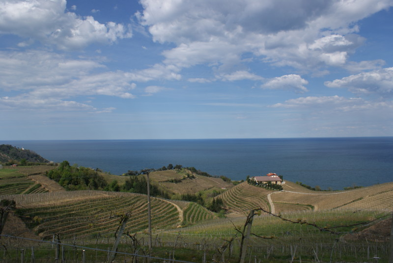 Txakoli vineyards & sea